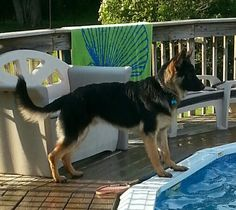 Fun summer days at the pool.