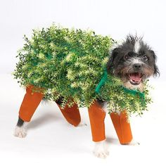 Clever Halloween Costume Ideas You'll Wish You'd Thought Of -  Chia pet costume for dogs We realize how cute your pet looks in her costume. But there are a few what to bear in mind before choosing the right outfit for the dog. Nowadays, lots of people dress up their pets on special occasions such as New Year's Eve or holidays. Choosing dog clothes is frequently fun, and seeing your pet in different costumes is likely to make everyone in the household happy. However, there are several points…