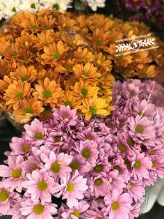Fiúnak, lánynak, bárkinek, aki szereti a virágot! Plants, Plant, Planets