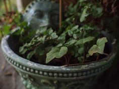 A lively ivy plant in a gorgeous pot with a clay mask nestled in the background. I love how rich the ivy color is against the blue-gray of the ceramic. Ivy Plants, Clay Masks, Secret Places, My Secret Garden, Gray, Flowers, How To Make, Blue, Color
