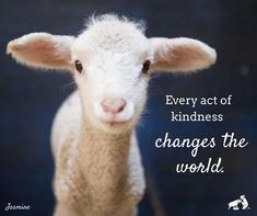 "Edgar's Mission (@edgarsmission) on Instagram: ""No matter how small, every act of kindness can change the world. For so many lambs like Jasmine,…"""