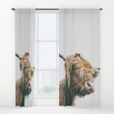 Majestic Highland cow portrait Window Curtains by Patrik Lovrin Photography | Society6 #art #homedecor #home