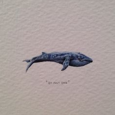 """""""Postcards for Ants is an ongoing painting project by Cape Town artist Lorraine Loots who has been creating a miniature painting every single day since January 1, 2013. The artist works with paint brushes, pencils, and bare eyes to render superbly detailed paintings scarcely larger than a small coin."""" Day 191 : Apparently, the blue whale's arteries are big enough for a baby to crawl through. 32 x 9 mm."""