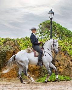 Lusitano Working Equitation