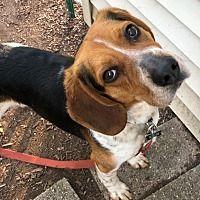 Pet Card Animals Pets Dog Adoption