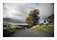 https://flic.kr/p/zWcnaV | SIGN OF THE TIMES | Autumnal tree on a quite road south of Crook of Devon.