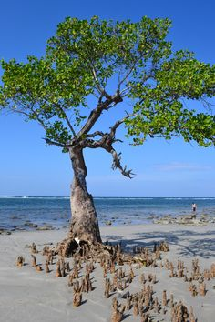 EAST TIMOR - Atauro Island - The island's name means goat and it is inhabited by about 8,000 people.