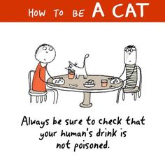 How To Be A Cat. // Honestly, I can't leave anything that even closely resembles food or drink around our kitten Loki. He will eat ANYTHING.