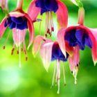 ¡Esta planta es la fuente de la juventud! ¡Puedes encontrarlafuente     en cualquier lado!