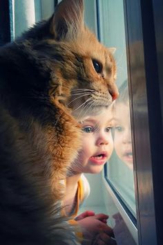 I believe the little human and his orange tabby cat friend are looking at something interesting. I believe the little human and his orange tabby cat friend are looking at something interesting. Animals For Kids, Animals And Pets, Baby Animals, Funny Animals, Cute Animals, Kids And Pets, Animals Images, I Love Cats, Crazy Cats