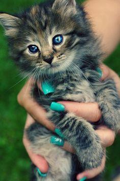 cute #cat