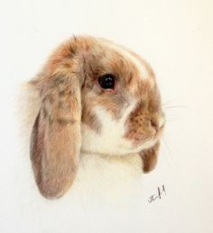 Items similar to Custom Color pencil Pet Portrait Drawing. Art by Yana Golikova. Rabbit artwork on Etsy Bunny Drawing, Bunny Art, Bunny Bunny, Bunny Painting, Cute Animal Drawings, Pencil Drawings, Drawing Animals, Cute Baby Bunnies, Rabbit Art
