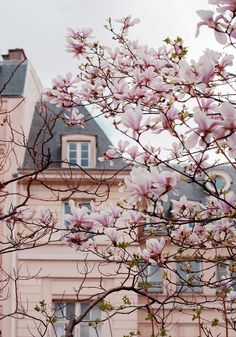 Photo journal no more of Paris in the spring - Ulrika Ekblom - Photography Jane Magnolia Tree, Beautiful Flowers, Beautiful Places, Paris In Spring, Spring Wallpaper, Spring Aesthetic, Summer Memories, Photo Journal, Cute Wallpapers