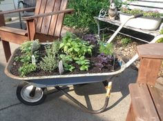 Portable Wheelbarrow Planter - A practical micro garden with easy access and so simple to move into sunny, shaded or protected positions. | The Micro Gardener