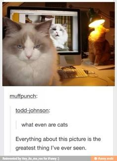 What are cats