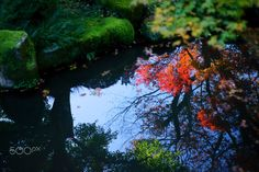 the Pond reflection Autumn leaves  Travel photo by Ganchan http://rarme.com/?F9gZi