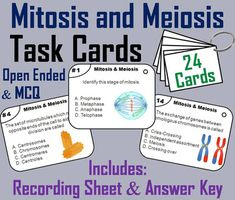 These task cards are a great way for students to improve their skills and knowledge of mitosis and meiosis. This product contains 24 cards with multiple choice questions about mitosis and meiosis. A recording sheet and an answer key are included. Blank cards are also included for questions to be added, if wanted.