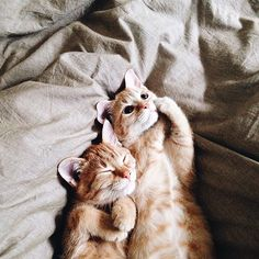 Today is Cuddly Kitten Day!😻 As if we needed another excuse to get all cuddly with our favorite furry friend. Ginger Kitten, Ginger Cats, Animals And Pets, Baby Animals, Cute Animals, Cute Kittens, Cats And Kittens, Orange Kittens, Derpy Cats