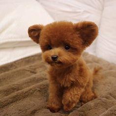 . 팔팔해진 곰돌이 슈 . . . #SHU #슈 #케릭터 #character #TeddySHU #poodle #redpoodle #toypoodle #teacuppoodle #푸들 #토이푸들