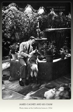 James Cagney and his chow at home in California   http://www.worldchow.com/uploads/6/1/9/6/6196676/2996994_orig.jpg