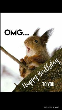 OMG Happy birthday Funny Squirrel - Happy Birthday Funny - Funny Birthday meme - - OMG Happy birthday Funny Squirrel The post OMG Happy birthday Funny Squirrel appeared first on Gag Dad. Happy Birthday Squirrel, Funny Happy Birthday Meme, Birthday Quotes For Him, Happy Birthday Images, Happy Birthday Greetings, Birthday Messages, Birthday Memes, Funny Squirrel, Squirrels