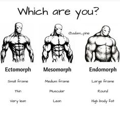 Ectomorph workout - Types of fit body which are you from these body types Ectomorph, Mesomorph or Endomorph body types body types male body types chart body types fit body types drawing body types male muscle Fitness Workouts, Gym Workout Tips, Fitness Tips, Fitness Motivation, Mens Body Types, Ectomorph Workout, Muscle Fitness, Build Muscle, Gain Muscle