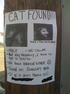 cat found | Flickr - Photo Sharing!