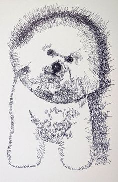 Bichon Frisé: Dog Art Portrait by Stephen Kline - Dog art drawn entirely from the words Bichon Frisé. drawdogs.com : drawdogs.com http://drawdogs.com/product/dog-art/bichon-frise-dog-portrait-by-stephen-kline/