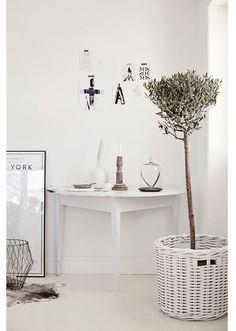een olijfboompje in huis