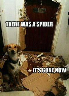 This dog needs to be adopted by a SWAT team...breaking down doors and loving it! #dogs #humor