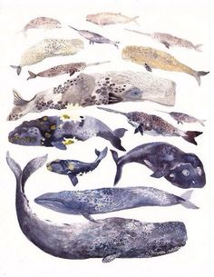 This is an archival print of my original watercolor painting. A collection of my whale illustrations though the years in one grouping. Art And Illustration, Illustrations, Motifs Animal, Whale Art, Inspiration Art, Art Design, Sea Creatures, Oeuvre D'art, Beautiful Birds