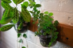 5 Clver Ways to Turn Old Canisters into an Indoor Garden. http://www.mindbodygreen.com/0-17742/5-clever-ways-to-turn-old-containers-into-an-indoor-garden.html