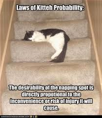 They say that between ceiling cat and basement cat is halfway-down-the-stairs-cat...
