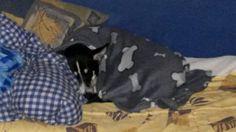 Eingekuschelt lässt es sich am Besten schlafen