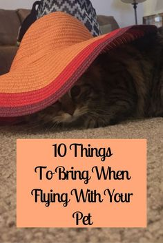 Are you considering traveling with your furry little friend? Here are our top 10 things to bring when flying with your pet to make your flight go smoothly!