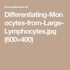 Differentiating-Monocytes-from-Large-Lymphocytes.jpg (600×400)