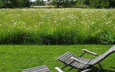 Afbeeldingsresultaat voor bloemenweide