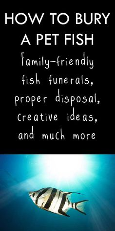 55 best pet cremation urns memorials images on pinterest pet family friendly fish funerals proper disposal burial creative ideas and more pet cremation solutioingenieria Image collections