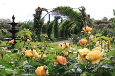 Alowyn Gardens Coldstream www.yarravalleymagazine.com.au