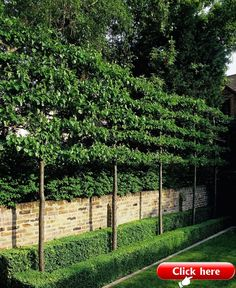 Garden Screening Ideas - Screening can be both ornamental as well as functional. From a well-placed plant to upkeep cost-free fence, here are some imaginative garden screening ideas. Back Gardens, Small Gardens, Outdoor Gardens, Formal Gardens, Outdoor Sheds, Outdoor Rooms, Garden Privacy, Garden Ideas For Privacy, Privacy Trees
