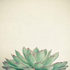 Echeveria Art Print by Cassia Beck   Nature Photography Art