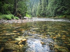 """The """"Shadowy"""" St. Joe River runs between two of the lakes in a truly magnificent watery scene found nowhere else in the world. Sandpoint Idaho, St Joes, Lost River, Utah Hikes, Colorado Hiking, State Parks, Places To See, Beautiful Places, Scenery"""