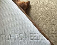 tuft&needle mattress dog poking head out