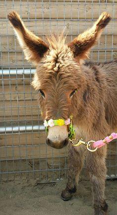 DonkeyLand                                                                                                                                                                                 Mehr