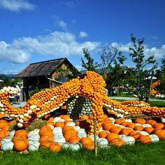 Pumpkin exhibition Switzerland, Pumpkin, Youtube, Outdoor, Instagram, Outdoors, Pumpkins, Outdoor Games, Squash