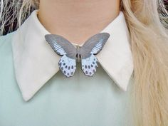 Cute Moth Insect Bug Butterfly Nature by Hoodratroughdiamond