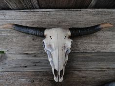 Cow Skull Faux Taxidermy Faux Longhorn Steer Skull by JUNKINTIME