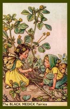 The Black Medick Fairy by Cicely Mary Barker from the 1920s. Quilt Block of vintage fairy image printed on cotton. Ready to sew. Single 4x6 block $4.95. Set of 4 blocks with pattern $17.95.
