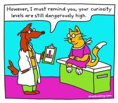 Curiosity killed the cat so cute Medical Humor, Nurse Humor, Cheap Pet Insurance, Curiosity Killed The Cat, Pet Vet, Curious Cat, Diabetic Dog, Dog Snacks, Beautiful Cats