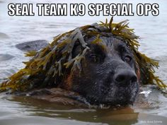 Military K9's.... guess my Irish Water Spaniel has genetic camoflage since this is what they look like naturally, while swimming c